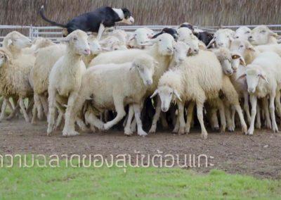 scenery-farm-camp00005