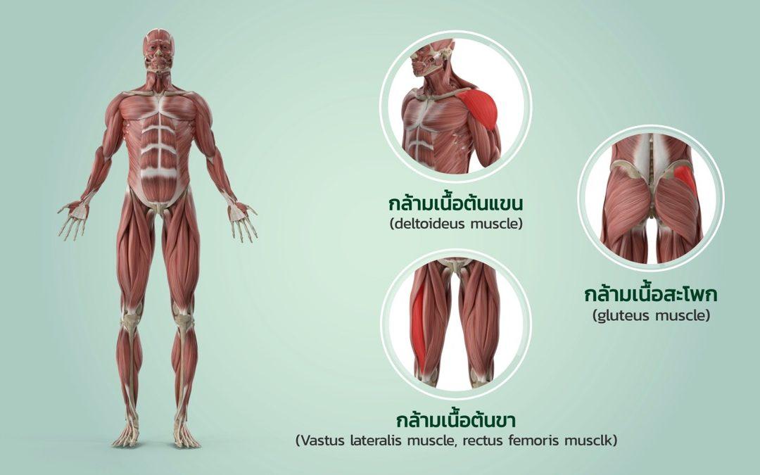 ผลิตสื่อการสอน คณะพยาบาลศาสตร์ มหาวิทยาลัยราชภัฏเพชรบุรี